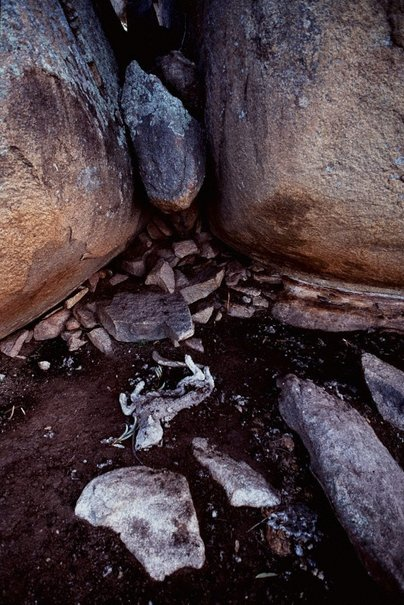 An image of Death in Monaro Country, NSW by David Moore
