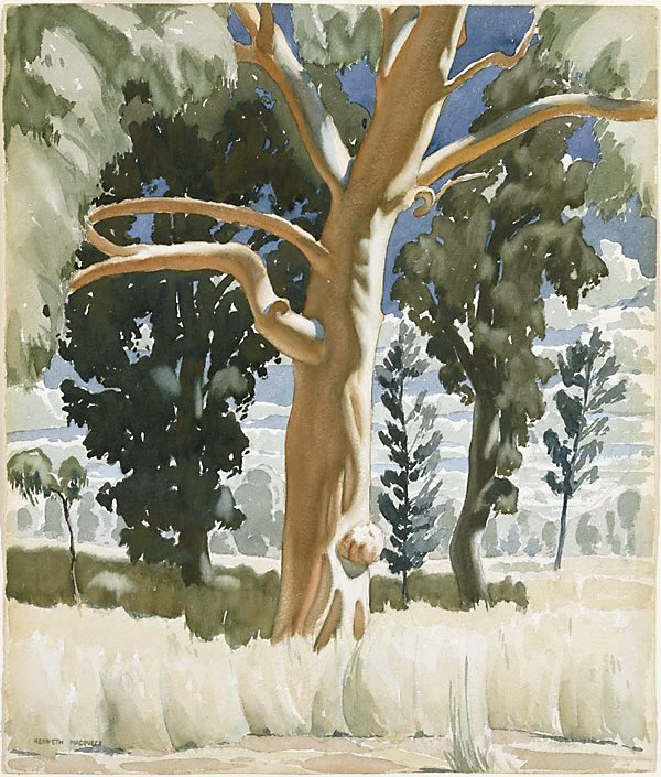 An image of The red gum