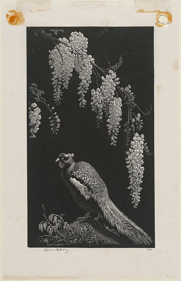 An image of Pheasant and wisteria