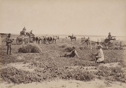 An image of On Culpaulin Station, Darling River by Charles Bayliss