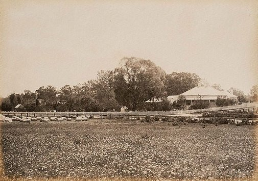 An image of Homestead Moorara Station, Darling River by Charles Bayliss