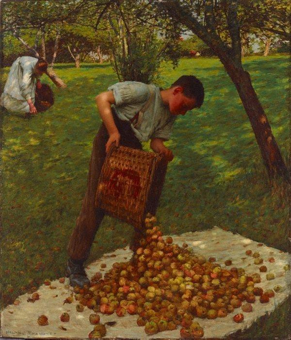 An image of Cider apples