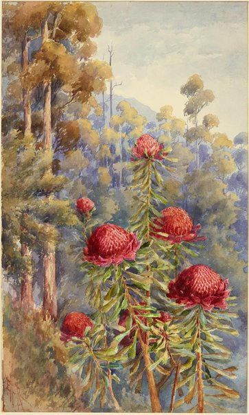 An image of Waratahs, New South Wales by Ellis Rowan