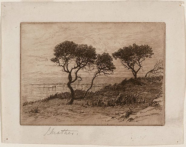 An image of Ti-trees by the shore
