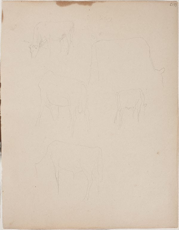 An image of (Cow studies) (Early Sydney period)