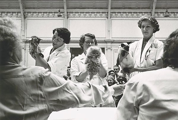 An image of Cat show, London