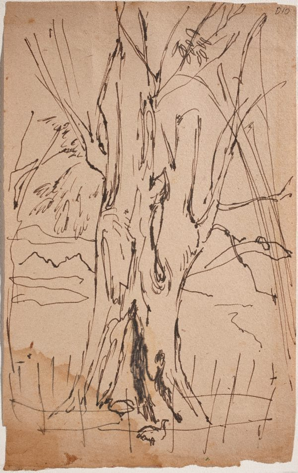 An image of (Tree trunk) (Sketches from Wangi and Lake Macquarie)