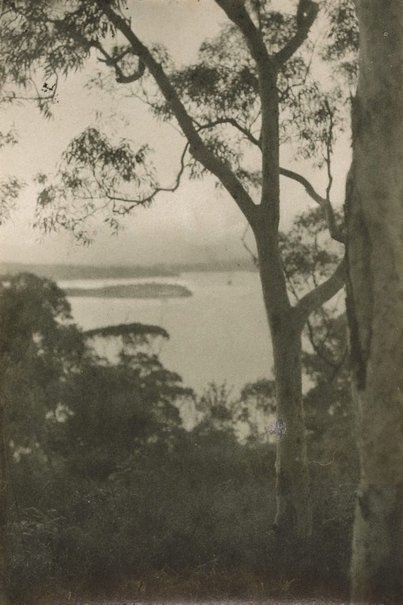 An image of Untitled (gum trees) by Norman C Deck