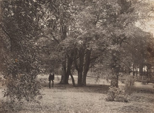 An image of Untitled (man in garden)