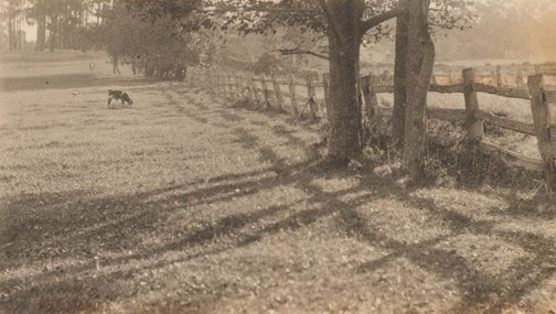 An image of Untitled (cow grazing) by Norman C Deck