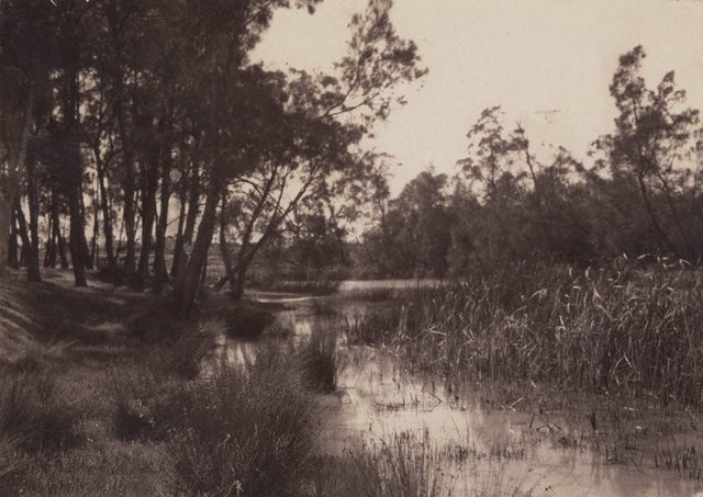 An image of Untitled (riverbank)
