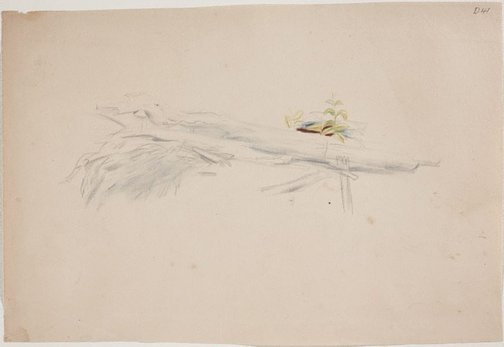 An image of (Tree stump study with new growth) (Sketches from Wangi and Lake Macquarie) by William Dobell