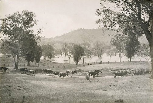 An image of Flooded Murray landscape by Harold Cazneaux