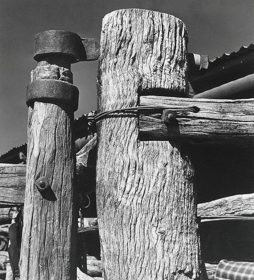 An image of Two posts, 'Millungera' by Max Dupain