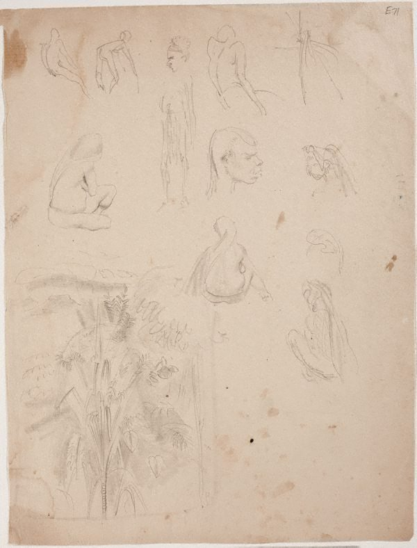 An image of (Figure studies and tree study) (Landscapes and natives from New Guinea)