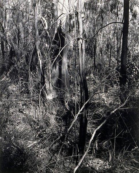 An image of Ku-ring-gai Chase I 1982 by Mark Johnson