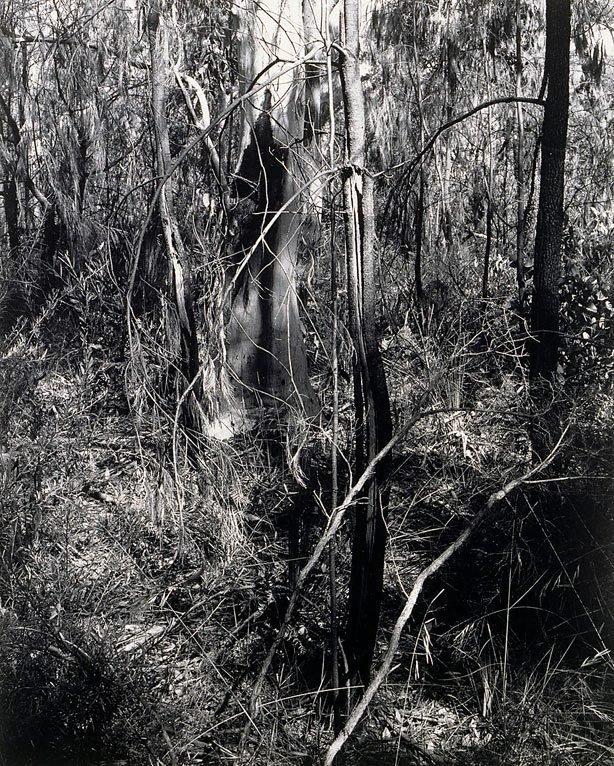 An image of Ku-ring-gai Chase I 1982