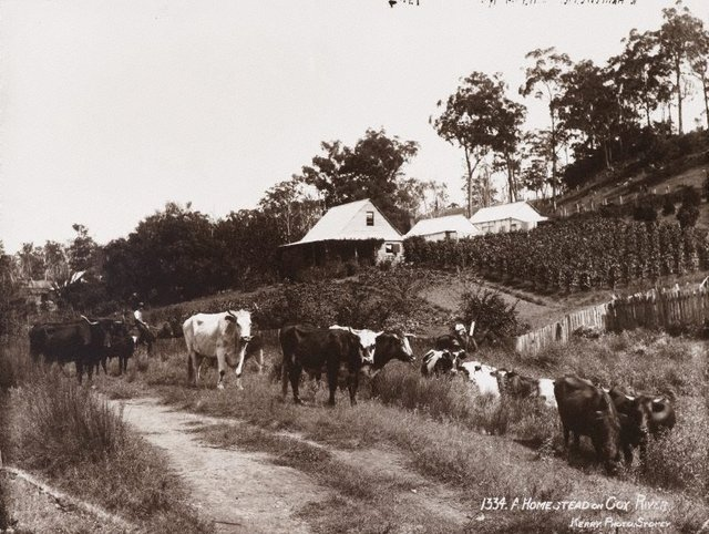 An image of A homestead on the Cox River