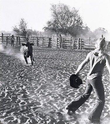 Running bull, 'Millungera', North Queensland, (1977, printed 1984) by Max Dupain