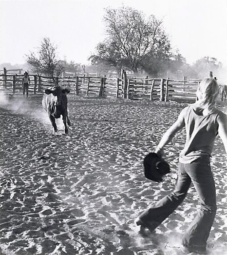Running bull, 'Millungera', North Queensland, 1977, printed 1984 by Max Dupain