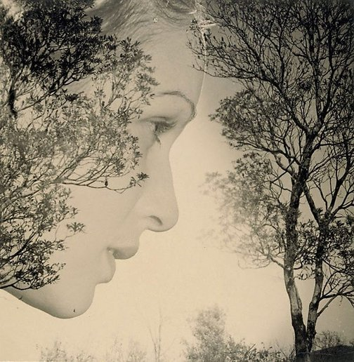 An image of Untitled (Woman profile and trees) by Max Dupain