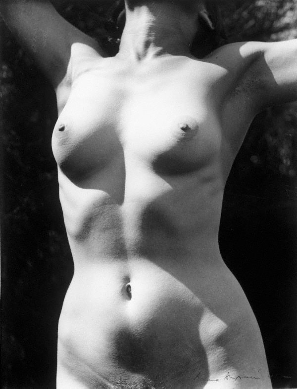 An image of Untitled (Nude torso - arms up)