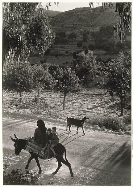 An image of Cyprus (woman and boys on donkey) by David Potts