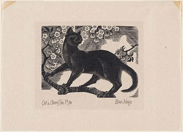 An image of Cat in cherry tree