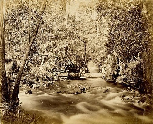 An image of Marley's Creek and Jefferson's Creek, Victoria by Unknown