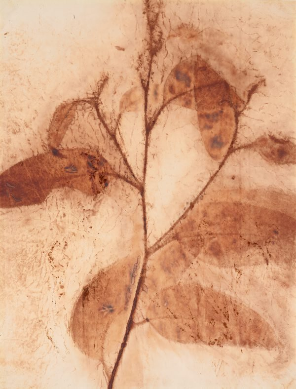 An image of Gum leaves