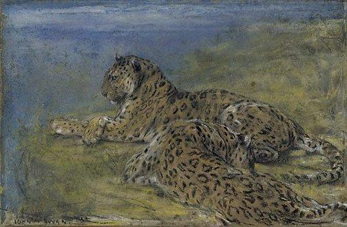 An image of Ceylon leopards by John Macallan Swan