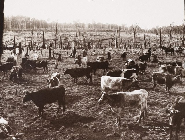 An image of Founding a dairy farm