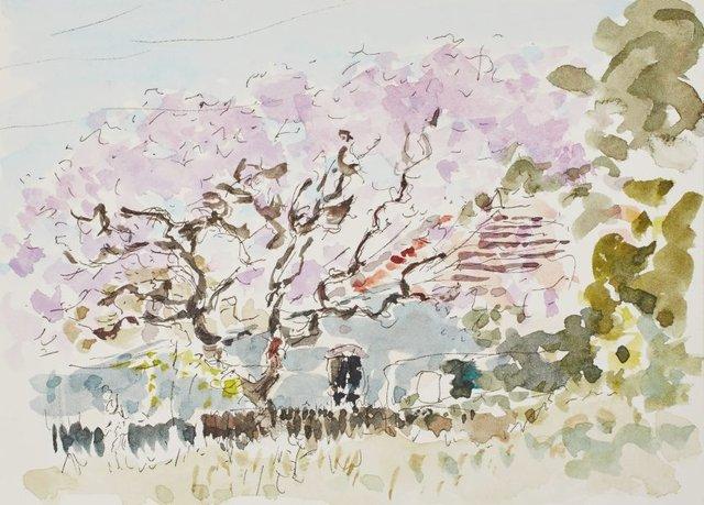 An image of Jacaranda, Lewisham