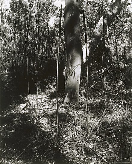 An image of Ku-ring-gai Chase II 1982