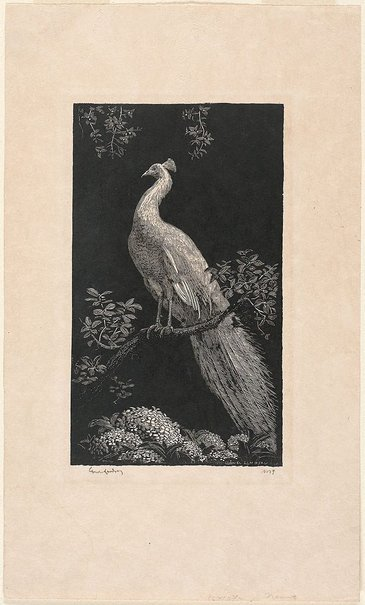 An image of The white peacock by Lionel Lindsay
