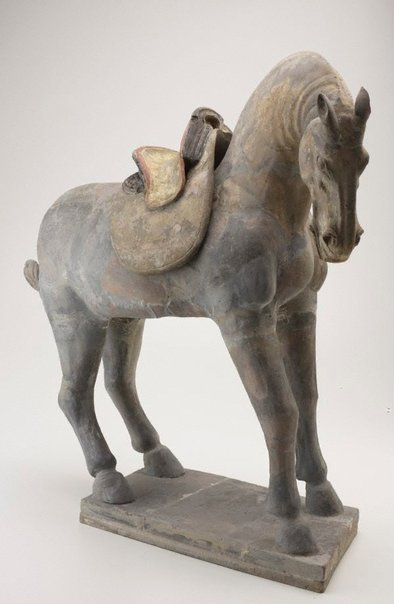 An image of Horse with saddle by