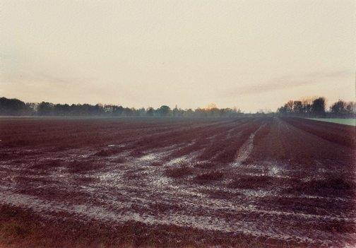 An image of Meersbusch, Krefeld by Andreas Gursky