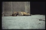 Alternate image of Sleepers II by Francis Alÿs