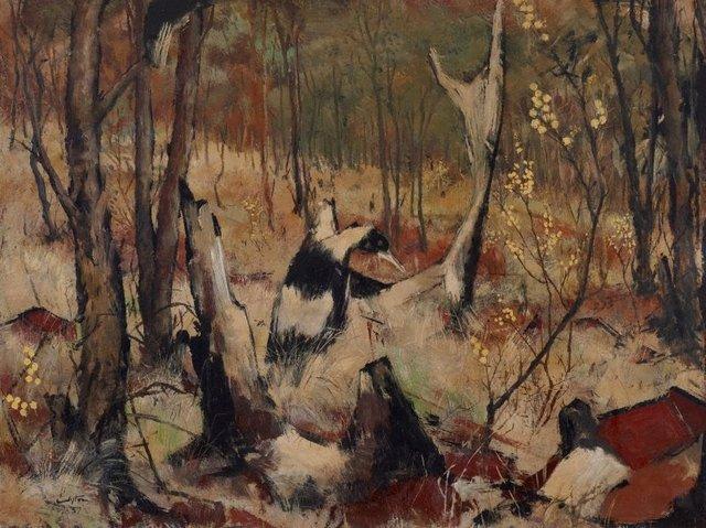 An image of Acacia and bush
