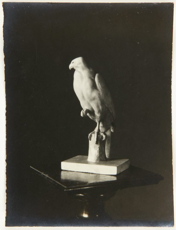 An image of Image of  'Hawk' c.1925 by Eleonore Lange
