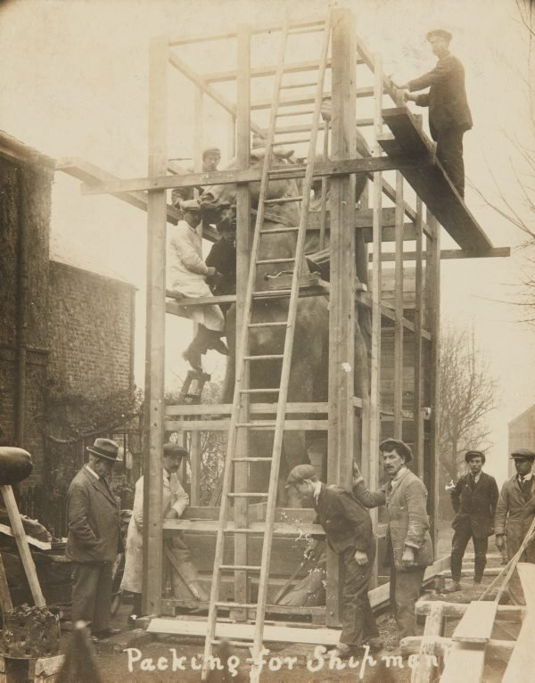 An image of 'The offerings of war' 1923 by Gilbert Bayes being packed for shipment from London to Sydney