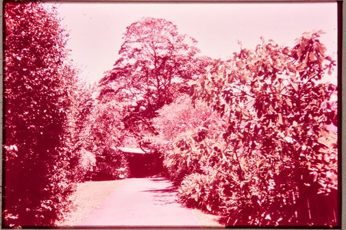 An image of Margel Hinder and Frank Hinder's garden at Gordon, Sydney by Unknown