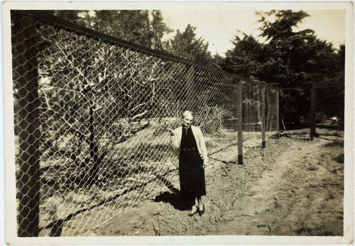 An image of Robert Klippel's mother, Haide, standing next to a fenced orchard by Unknown