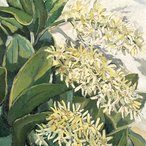 Image: Margaret Preston Australian rock lily 1933 (detail), Castlemaine Art Gallery & Historical Museum, Victoria Buda Collection © Margaret Rose Preston Estate, licensed by Viscopy, Sydney