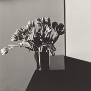 Image: Robert Mapplethorpe Tulips 1977 from the exhibition Robert Mapplethorpe: the perfect medium © Robert Mapplethorpe Foundation. Used by permission