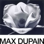 Image: Max Dupain The magnolia 1983, gelatin silver photograph, 39.5 × 49.8 cm image/sheet, gift of the artist 1986 © Estate of Max Dupain.