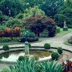 Image courtesy Australian National Botanic Gardens
