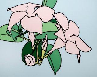 AGNSW prizes Marcel Cousins Flor de Alegría Mandevilla so pink (still life), from Sir John Sulman Prize 2015