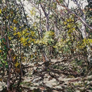 AGNSW prizes Nicholas Harding Wilpena wattle, from Wynne Prize 2016