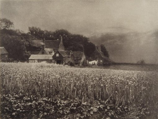 George DavisonThe onion field 1890, printed 1907 from Camera Work, no 8, April 1907photogravure
